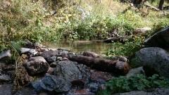 Заводь на речке Чукур 17 августа
